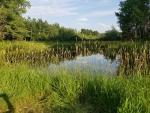 Hansen Pond